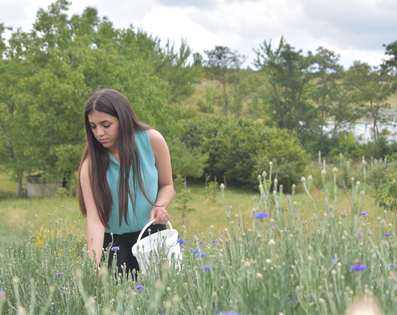 Sektori i bimëve mjekësore dhe aromatike (BMA) krijon vende pune për të rinjtë